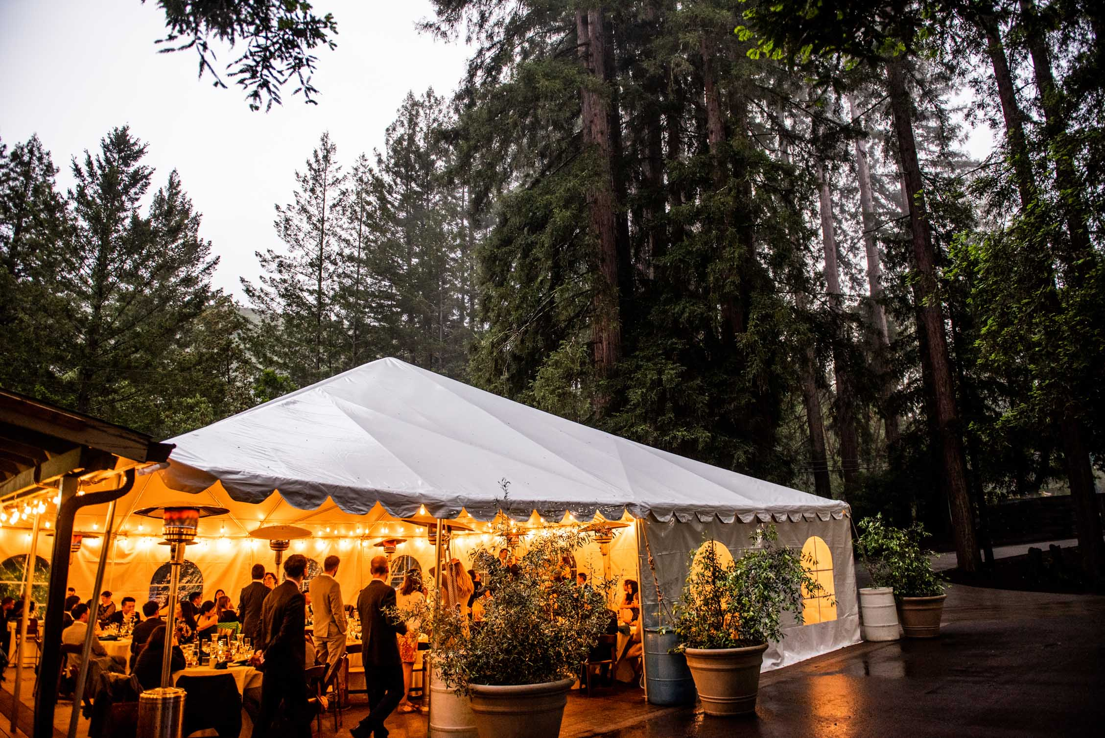 Wedding tent lit with string lights in the redwood forest